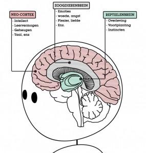 B-Mind_Wim-Hof-Methode-Running_Mental-Coaching_Mindfulness_Eindhoven_WHM-geheimen-brain
